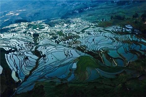 ท่องเที่ยวเชิงเกษตรนาขั้นบันไดฮาหนี หยวนหยาง บรรเทาความยากจนให้กับเกษตรกร