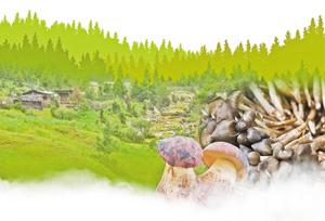 ยูนนานกินของจากธรรมชาติ เปลี่ยนเห็ดป่าให้เป็นรายได้
