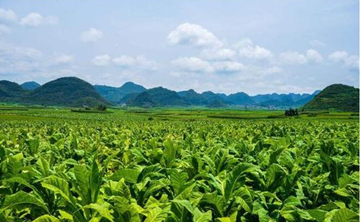 Yunnan's tobacco income to reach 160 billion yuan by 2025