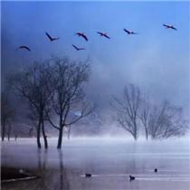 首批黑颈鹤飞抵云南会泽念湖越冬