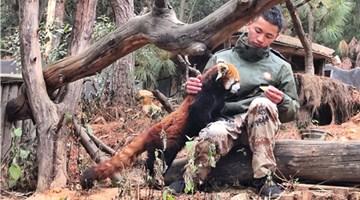 Animals in Yunnan enjoy delicacies on Laba eve