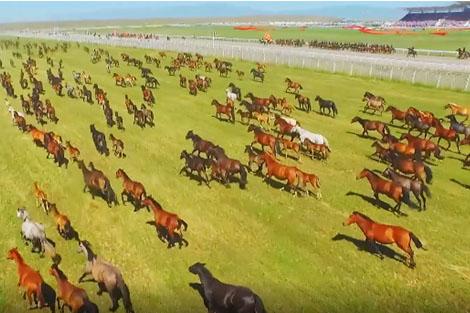 """""""Tôi ở Tân Cương: Vua ngựa Bapa"""""""