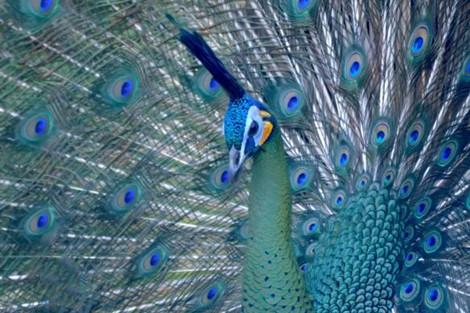 """၈ ႀကိမ္ေျမာက္ """"ကမာၻ႔ေတာ႐ိုင္းတိရစာၦန္ႏွင့္ ႐ုကၡပင္ေန႔"""" အခမ္းအနားကို က်င္းပခဲ့ၿပီး COP 15 အစည္းအေဝးႀကီးကို အေဆြတို႔ အတူတကြ ပါဝင္တက္ေရာက္ရန္ ေလးစားစြာ ဖိတ္ၾကား"""