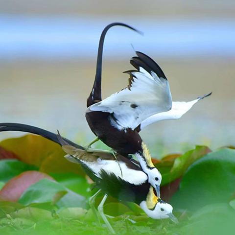 图览保山生物多样性之美