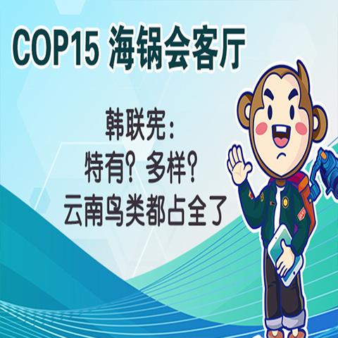 COP15海锅会客厅 | 韩联宪:特有?多样?云南鸟类都占全了