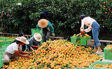 """การค้าระหว่างประเทศไตรมาสแรกของยูนนานเติบโตอย่างรวดเร็ว สินค้าเกษตรขายดีในประเทศ """"หนึ่งแถบหนึ่งเส้นทาง"""""""