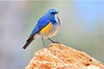 Phát đi hình ảnh những chú chim khôn lanh dễ thương ở núi Lão Quân, Lệ Giang