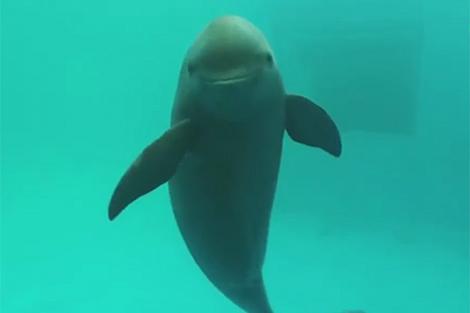 Trung Quốc phát hiện cá heo sông đặc hữu sau nhiều năm nỗ lực bảo tồn