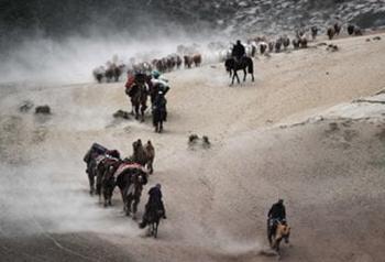 Hùng vĩ cảnh tượng đàn gia súc di cư ở Tân Cương