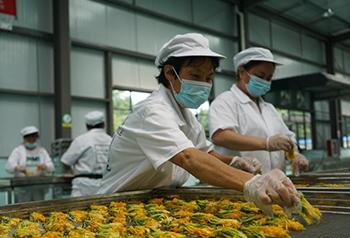 ดอกสายน้ำผึ้งสร้างความร่ำรวยให้กับชาวสุยหยางกุ้ยโจว