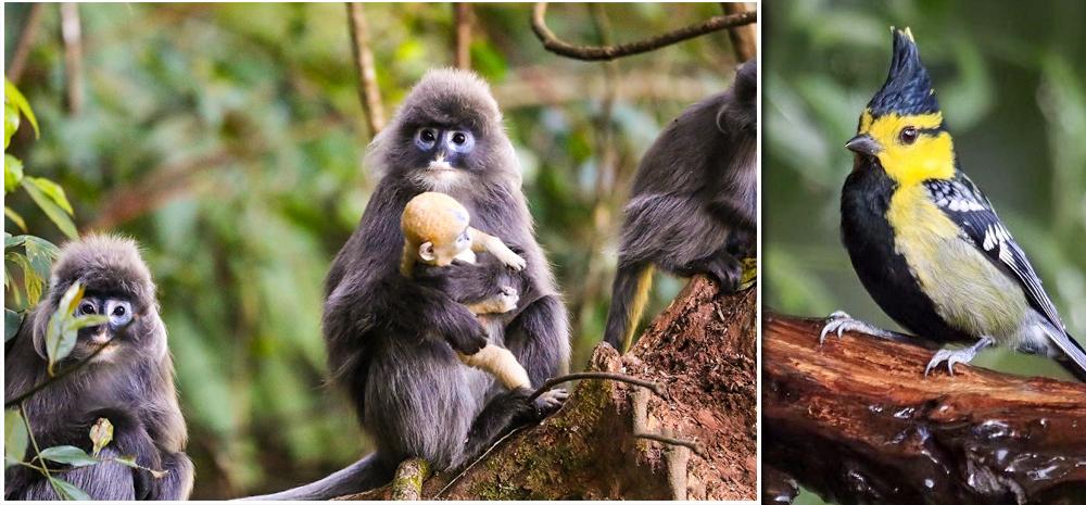 神奇动物在高黎贡山