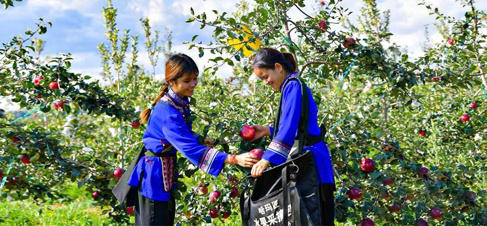 """云南石林:把""""小苹果""""做成大产业"""