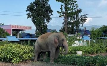 Gia đình voi châu Á ghé thăm trại cảnh sát