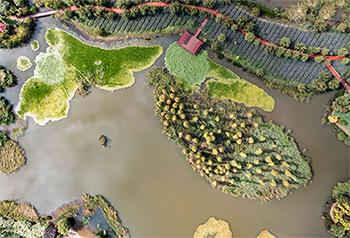 Triển lãm ngoài trời COP15- Vùng đầm lầy Bảo Phong  Côn Minh