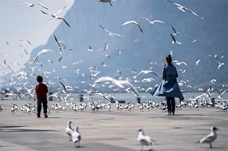 Côn Minh: Thành phố mùa xuân tươi đẹp