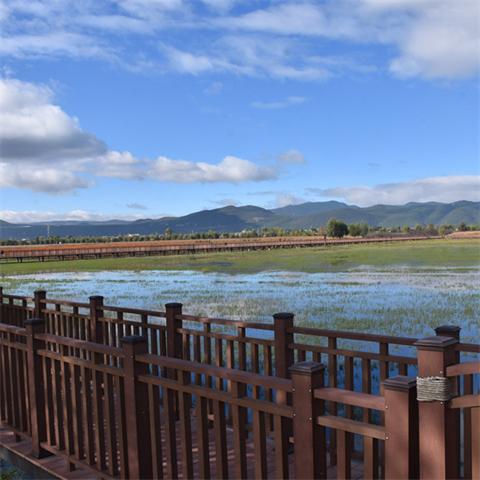 丽江拉市海:候鸟扮靓湿地