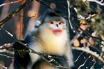 Amazing wild animals in Yunnan