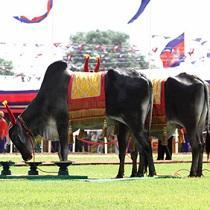 柬埔寨举行一年一度的御耕节