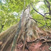 建言勐远仙境保护提升