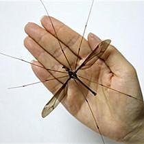 昆虫学家发现巨大蚊标本 获吉尼斯世界纪录认证