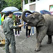 """我们名叫""""亚洲象"""",我们生活在西双版纳"""
