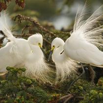 云南昌宁:春天里的鸟儿乐园
