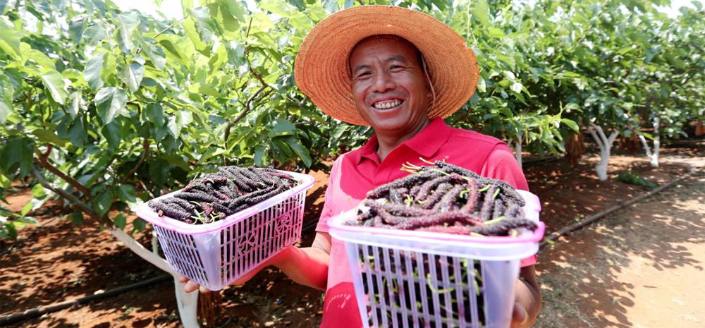 เมืองเหมิงจึ-หงเหอ ผสานการท่องเที่ยวเข้ากับการเก็บผลไม้จากสวนได้รับความสนใจจากนักท่องเที่ยว และช่วยส่งเสริมการพัฒนาเศรษฐกิจของหมู่บ้าน