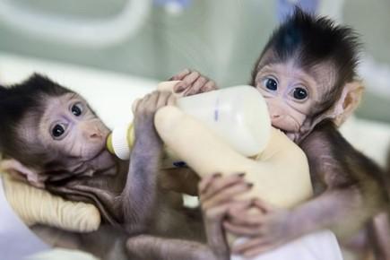 จีนโคลนนิ่งลิงโดยใช้ Non-reproductive