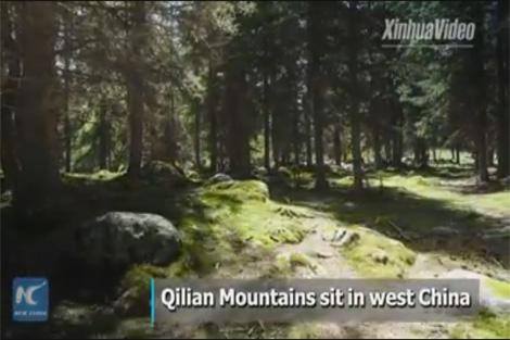 """ราวเทพสร้าง! จตุฤดูแห่งเทือกเขา """"ฉีเหลียนซาน"""" แดนมังกร"""