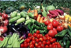 คุณภาพผลิตภัณฑ์สินค้าด้านการเกษตรของจีนผ่านมาตรฐานความปลอดภัย 97.8%