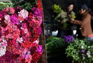 ในปี 2018 ยูนนานมียอดการซื้อขายดอกไม้ตัดช่อ1.16 หมื่นล้านดอกสูงสุดเป็นอันดับหนึ่งของโลก