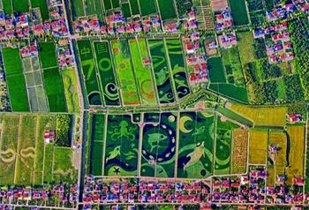 ภาพศิลปะบนนาข้าวพื้นที่ต่างๆ ทั่วจีนฉลอง 70 ปีจีนใหม่