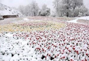 'ฤดูร้อน' ปีนี้ที่ซินเจียงยังคงมีหิมะปกคลุมบางส่วน