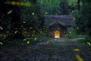 แสงหิ่งห้อยประดับราตรีเมืองหนานจิง