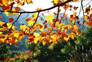 เมืองเจาทง มณฑลยูนนานเต็มไปด้วยบรรยากาศของฤดูใบไม้ร่วง ป่าไม้ถูกแต่งแต้มด้วยหลากหลายสีสันจากธรรมชาติ