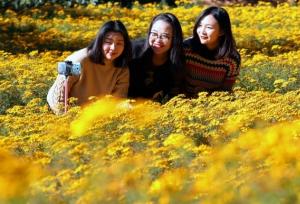 ดาวเรืองกว่า 6 หมื่นต้นในสวนสาธารณะเจียวเย่ เมืองคุนหมิงกำลังออกดอกบานสะพรั่ง