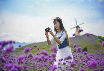 มณฑลกุ้ยโจวประชาสัมพันธ์การท่องเที่ยวชมดอกไม้ 41 เส้นทาง