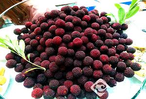 ផ្លែ  Red Bayberry ទុំហើយ  មកនាំគ្នាញ៉ាំជាមួយគ្នា